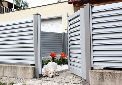 offene Gartentür mit Lamellen als Sichtschutz , mit kleinem Hund im Eingang